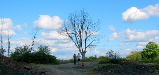 Dead Tree Centralia PA Burn Zone