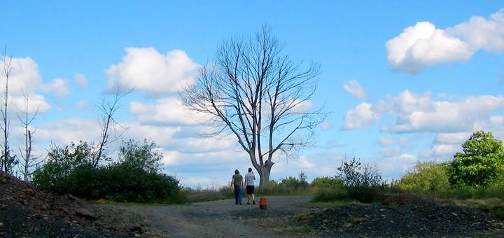 Dead Tree Centralia PA Burn Zone